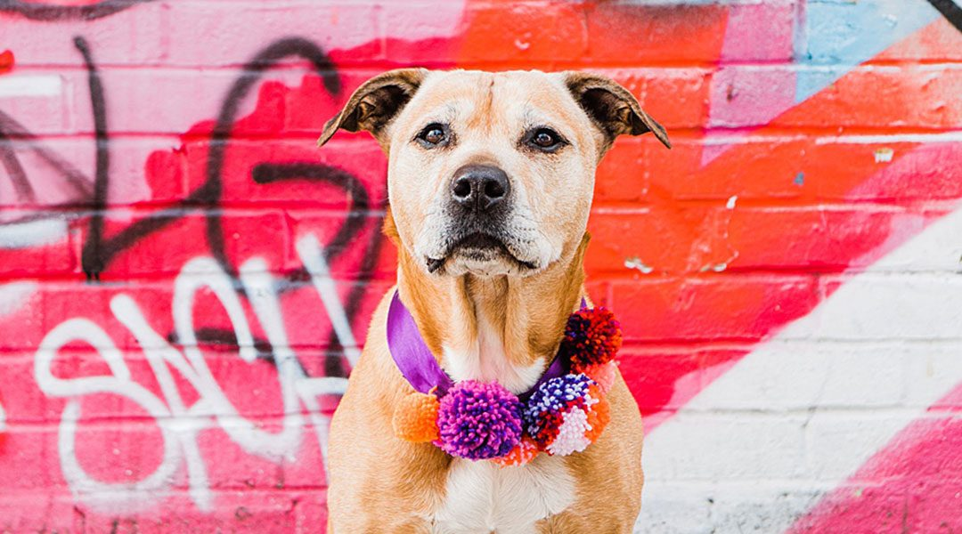 WANTED: Dog models for a London Photo Shoot