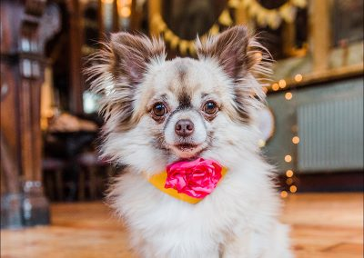Commercial dog photographer_0003
