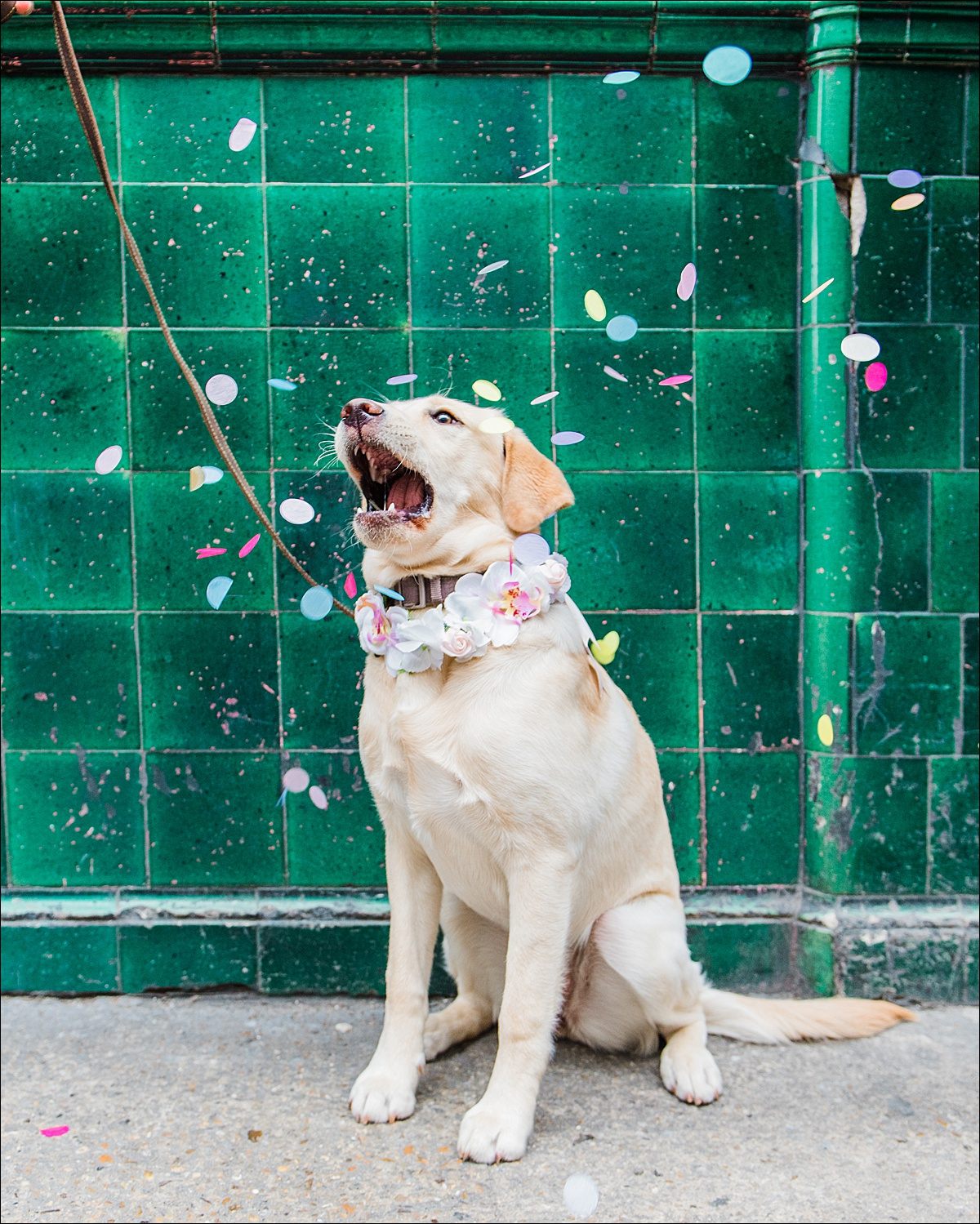 Commercial dog photographer_0005