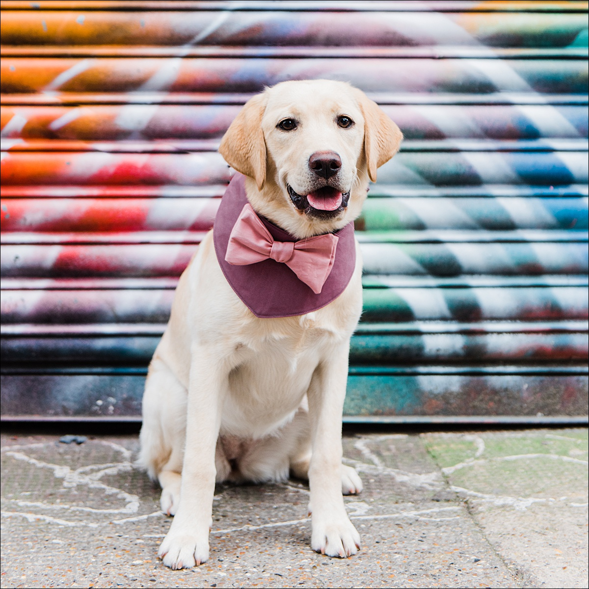 Commercial dog photographer_0006