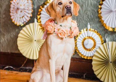 Commercial dog photographer_0007