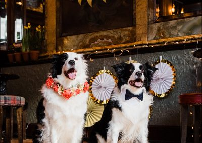 Commercial dog photographer_0008