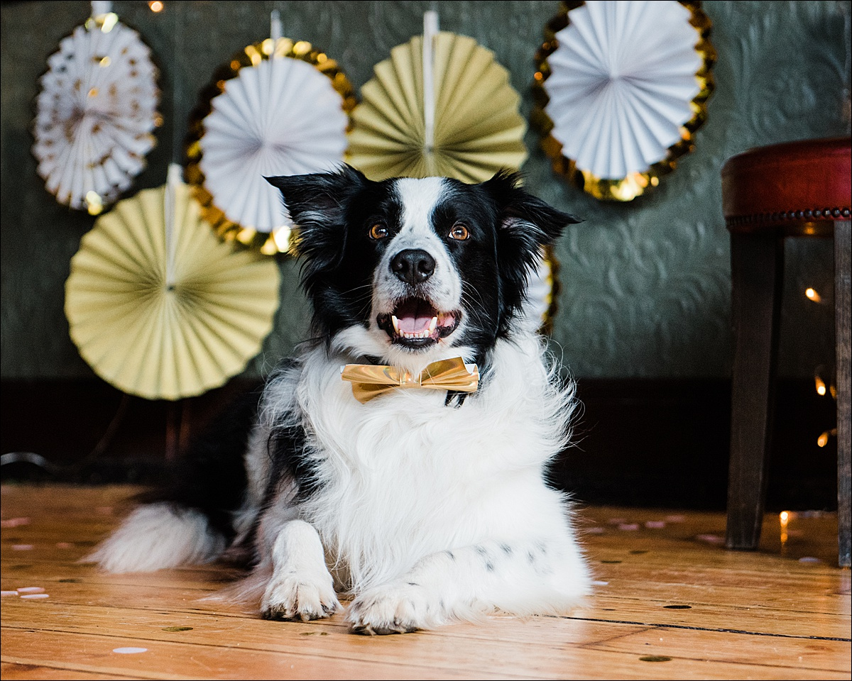 Commercial dog photographer_0009