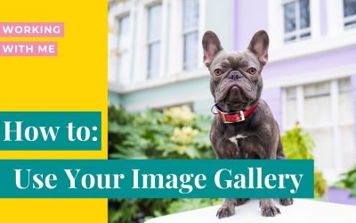 How to download and purchase images from your dog photo shoot gallery