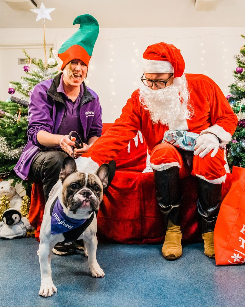 Alan carr dressed as Santa with a french bull dog and Mayhew staff member