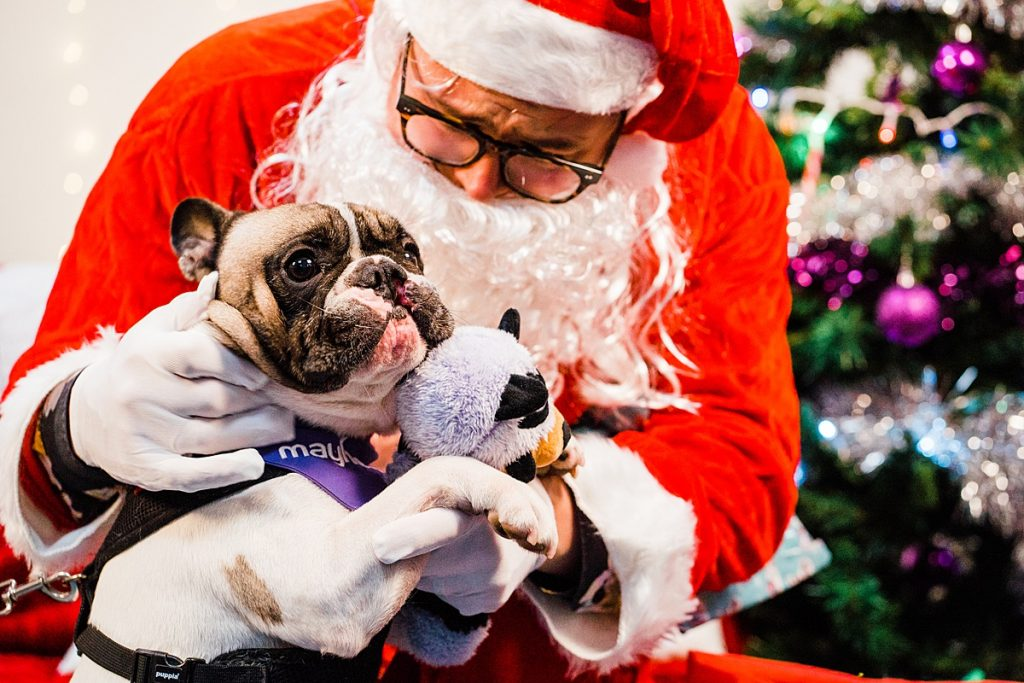 Pet Charity Photography - Alan Carr dressed as Santa gives dog toy to French bull dog