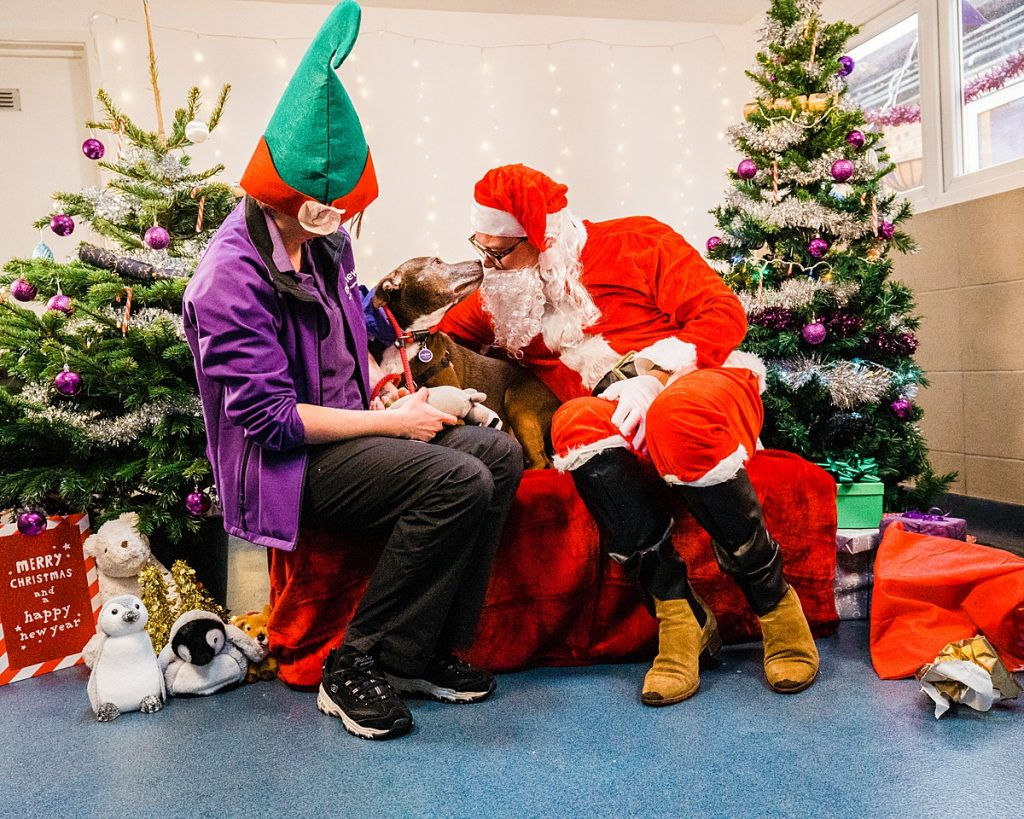 Pet Charity Photography - Alan Carr visits Mayhew at Christmas and meets rescue dogs