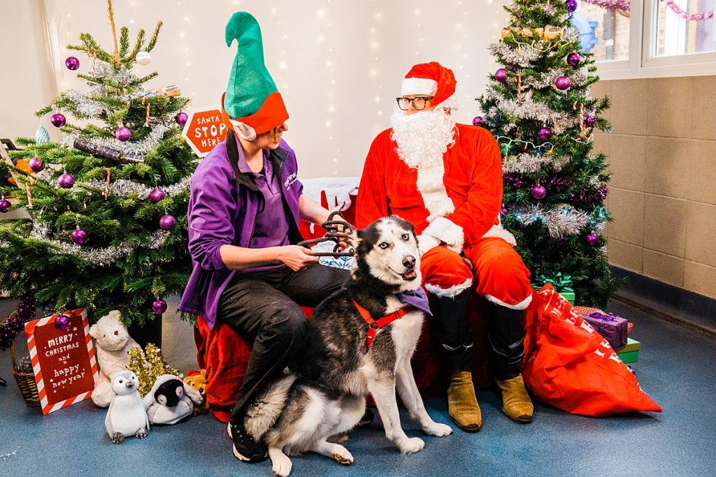 Pet Charity Photography - Black and white husky poses with Alan Carr at Mayhew