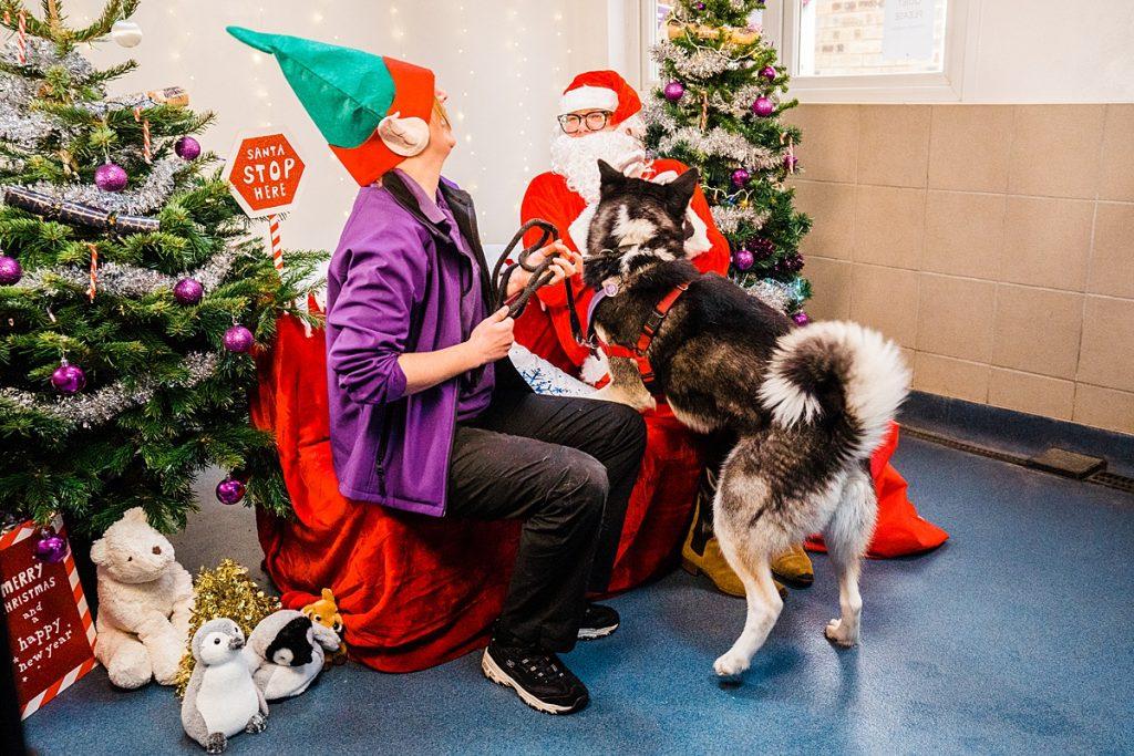 Dog Photography - Husky rescue dog jumps on comedian Alan Carr