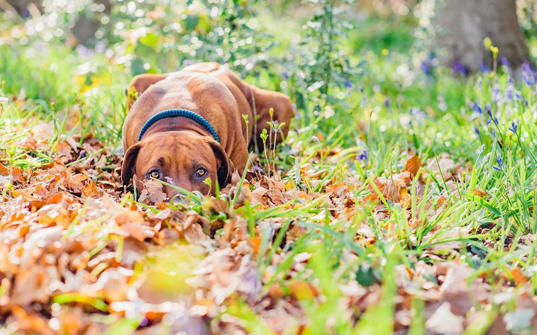 Dog Photography Tips: How to prepare for your dog photoshoot